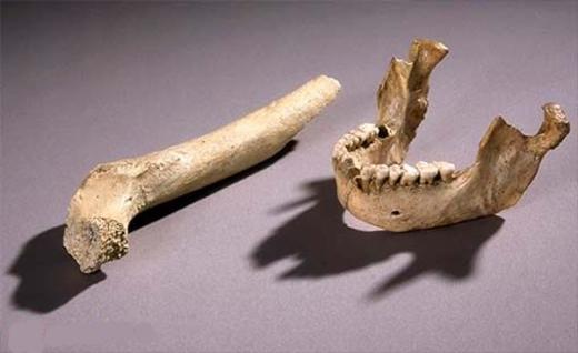 _mandibula_neandertal_02